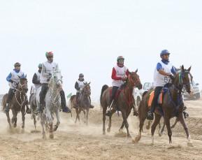Longines Endurance Horse Race | Sport Photographer | Cameron Clegg Photography | Sydney, Australia